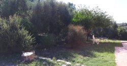 Magliano in Toscana a 1 km dal paese casale 200 mq con corte di 2500mq